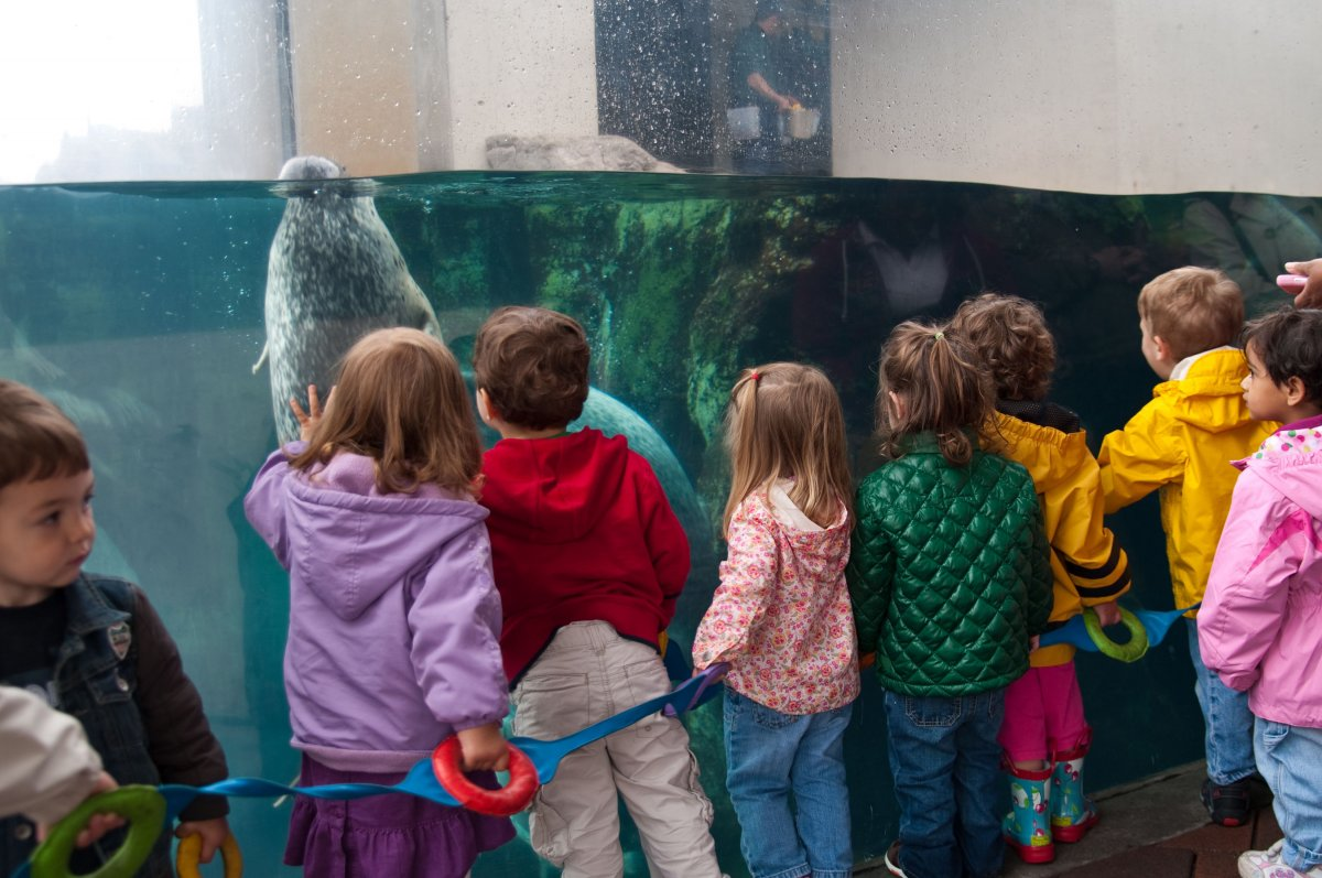 new_england_aquarium_children_and_seals