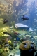 new_england_aquarium_myrtle_in_giant_ocean_tank